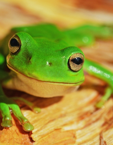 Should You Date a Frog or a Prince?